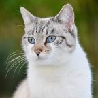 貓毛過敏,公貓與母貓有差別嗎?